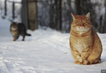 Homeless cats winter - image gratuit #413087