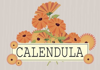 Free Calendula Illustration - Free vector #413907