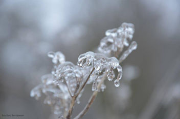 Sweet nature - image #416767 gratis