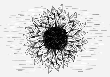 Free Vector Sunflower Illustration - vector gratuit #417077