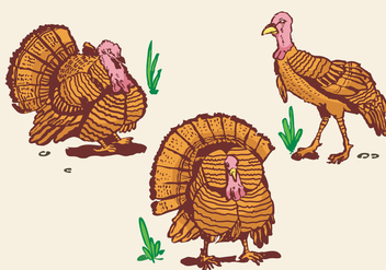 Wild turkey pose illustration - бесплатный vector #418637
