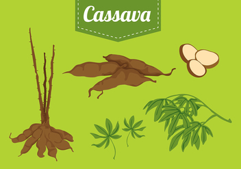 Cassava Set Free Vector - бесплатный vector #423677