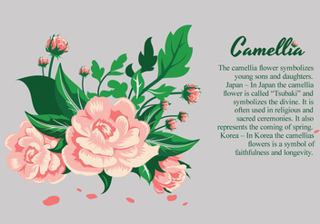 Camellia flowers design illustration - Free vector #424757