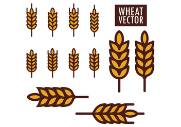 Wheat Vectors - vector gratuit #424997