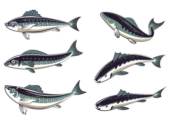 Set Fresh Sardines Hand Drawn Style - vector gratuit #428527