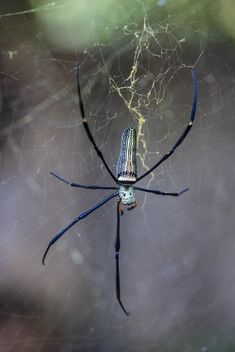 Close-up of spider on cobweb - image gratuit #428767