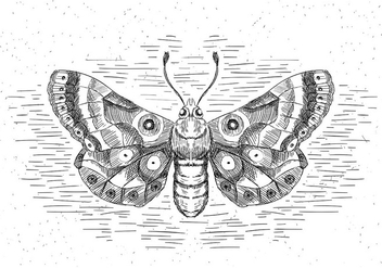 Free Hand Drawn Vector Butterfly - vector #429517 gratis