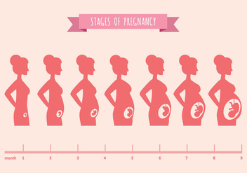 Vector Illustration of Pregnant Female Silhouettes - бесплатный vector #431097