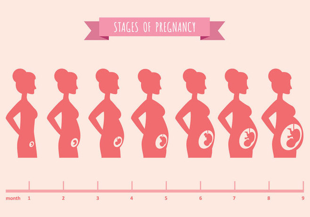 Vector Illustration of Pregnant Female Silhouettes - vector gratuit #431097