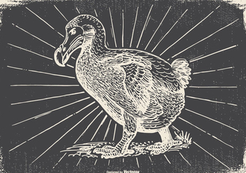 Vintage Dodo Bird Illustration - бесплатный vector #433197