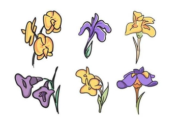 Free Beautiful Iris Flower Vector - Free vector #433277