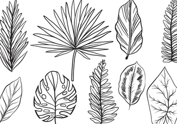 Free Vintage Exotic Leaves Vectors - бесплатный vector #433457