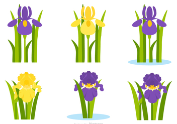 Flat Purple And Yellow Iris Flower Vector Set - Free vector #433477