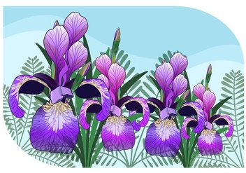 Iris Flower Vector Illustration - Free vector #433557