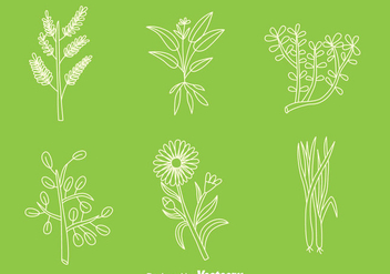 Hand Drawn Herbal Medicine Plant Vectors - Free vector #433707