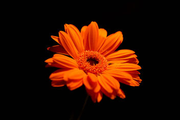 Orange On Black - image #434367 gratis