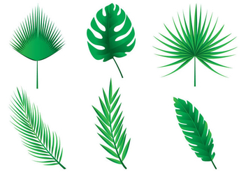 Palm Leaves Vectors - Kostenloses vector #434577