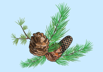 Vector Pine Cones Illustration - бесплатный vector #434717