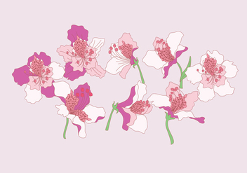 Rhododendron Flowers Vector - Free vector #435977