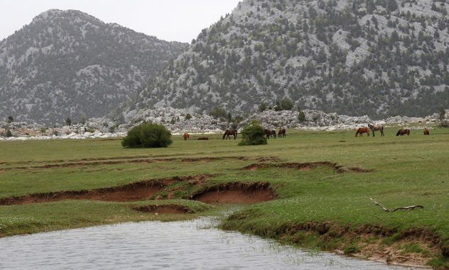 Turkey (Antalya) Eynif plain where wild horses live freely - бесплатный image #437317