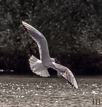 On the Tern - Not! - image gratuit #438917