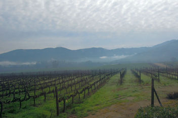 Chile (Valparaiso) Wet and foggy view of vineyards - image #438937 gratis