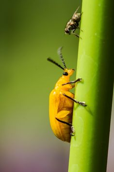 Orange beetle with his friend - image #439027 gratis