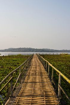 bamboo bridge - Free image #439037