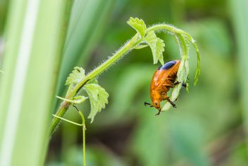 Orange bug on green leaf - image #439067 gratis
