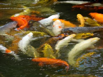 Fishes in pond - image #439217 gratis