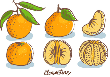 Clementine Doodle Sketch Vector Illustration - Free vector #439547