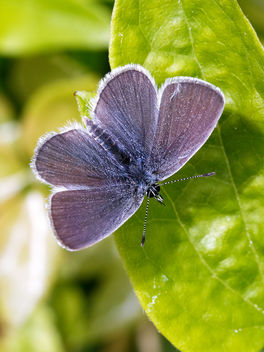 Small Blue - image #439957 gratis