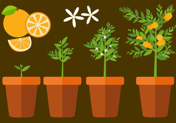 Clementine Plant Free Vector - Kostenloses vector #441137