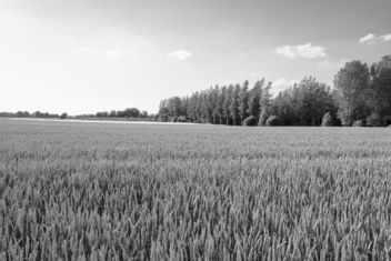 Wheat and Trees - image #446587 gratis