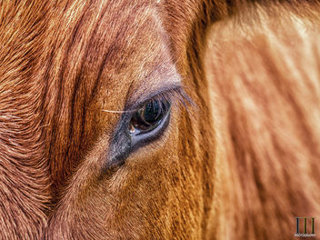 Window to the Soul - Free image #446947