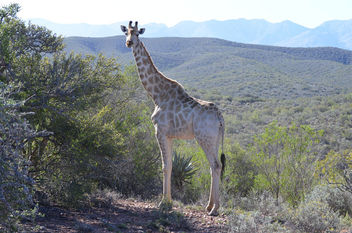 Safari Game Drive - Free image #449077