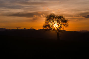 A Tree in the Sunset - image gratuit #449467