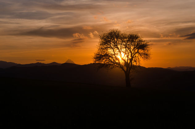 A Tree in the Sunset - image #449467 gratis