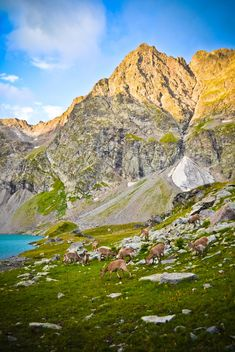 Goats near the lake in mountains - image #449577 gratis