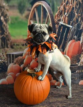 Boo Lefou Posing On A Pumpkin For You! - Free image #449737