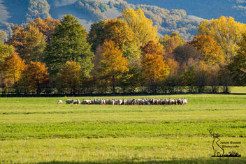 Sheeps and colors - Kostenloses image #449867