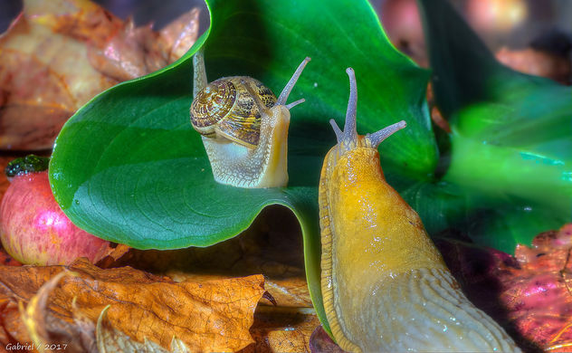 Babosa vs caracol / Slug vs snail - бесплатный image #449897