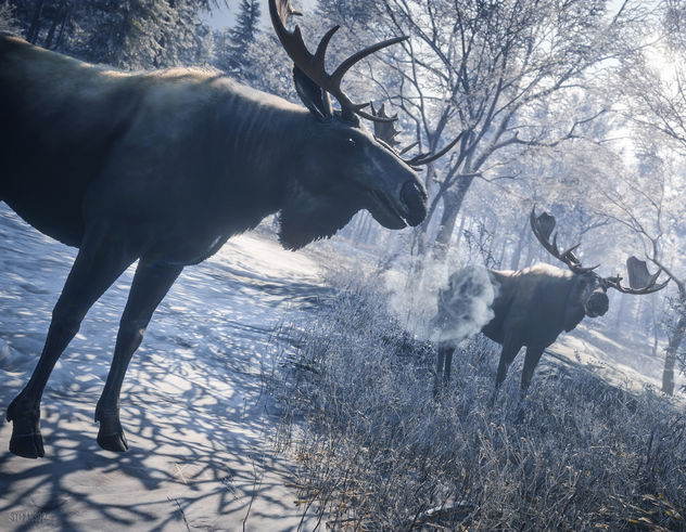 TheHunter: Call of the Wild / Welcome to the Moose Meeting - image gratuit #449947