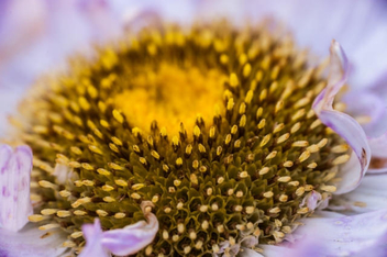 Close up of a flower's details - image #450187 gratis