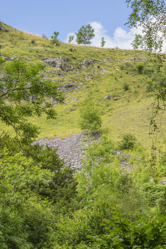 Trees-Ingleton Waterfalls - Free image #450237