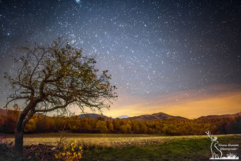 Apple tree under the night sky - бесплатный image #450267