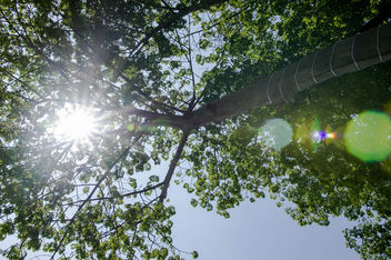 Sunshine coming through the tree branches - image #450297 gratis