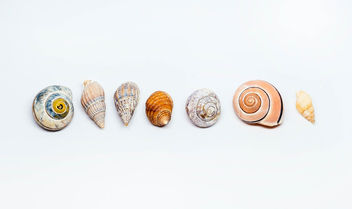 Group Of Sea Shells On white Background - бесплатный image #450417