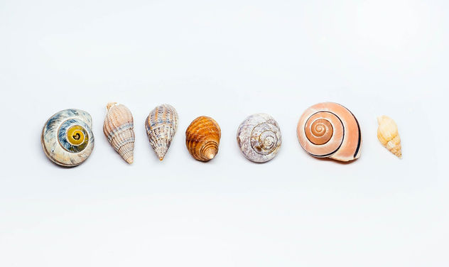 Group Of Sea Shells On white Background - Kostenloses image #450417