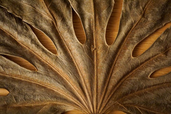 giant leaf - Kostenloses image #450797